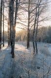 Jour de janvier dans la forêt Photos libres de droits