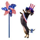 Jour de la Déclaration d'Indépendance 4ème de chien de juillet Photo libre de droits
