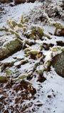 Jour de neige d'amusement au pays des merveilles d'hiver Photographie stock libre de droits