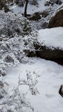 Jour de neige d'amusement au pays des merveilles d'hiver Image libre de droits