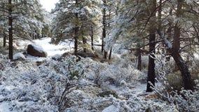 Jour de neige d'amusement au pays des merveilles d'hiver Images stock