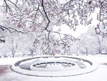 Jour de neige derrière la Maison Blanche  Image libre de droits