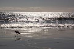 Jour de plage Image libre de droits
