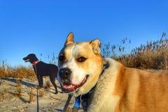 Jour de plage d'hiver Parc grand Hampton Va de vue photographie stock libre de droits