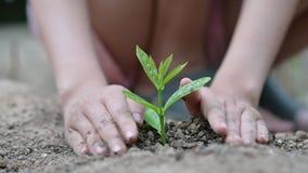 Jour de terre d'environnement dans les mains des arbres cultivant des jeunes plantes Bokeh verdissent la main femelle de fond ten clips vidéos