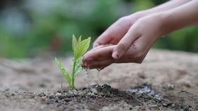 Jour de terre d'environnement dans les mains des arbres cultivant des jeunes plantes Bokeh verdissent la main femelle de fond ten banque de vidéos