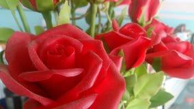 Jour de Valentine Images stock