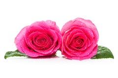 Jour de Valentines Rose photographie stock libre de droits