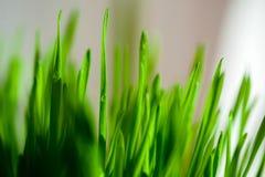 Jour de vue d'herbe de baisses de rosée photos stock
