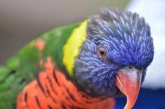 Jour de zoo photographie stock