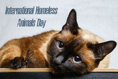Jour du monde des animaux égarés 18 August International Homeless Animals Day photos stock