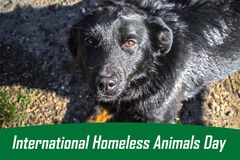 Jour du monde des animaux égarés 18 August International Homeless Animals Day image stock