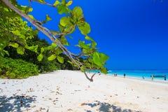 Jour ensoleillé à l'île de Tachai, parc national d'îles de Similan, province de Phang Nga, Thaïlande du sud Photo stock