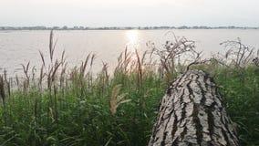 Jour ensoleillé d'été de forêt du soleil de nature de coucher du soleil de lac river photographie stock libre de droits