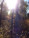 Jour ensoleillé d'automne Images stock