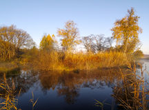 Jour ensoleillé d'automne au lac en bois Images libres de droits