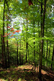 Jour ensoleillé d'automne dans la forêt carpathienne de montagne Images stock