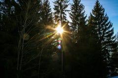Jour ensoleillé d'hiver Montagnes et arbres de forêt grands photographie stock libre de droits