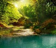 Jour ensoleillé dans la forêt de féerie Images stock