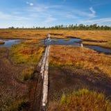 Jour ensoleillé dans le marais de Nigula Photographie stock
