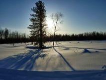 Jour ensoleillé dans une forêt photos libres de droits