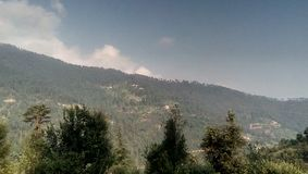 Jour ensoleillé de belle forêt image stock