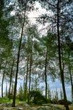 Jour ensoleillé de forêt au printemps photo libre de droits