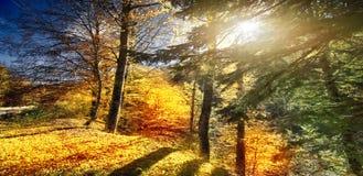Jour ensoleillé de forêt d'automne photo libre de droits