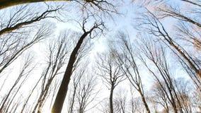 Jour ensoleillé de forêt de ressort clips vidéos