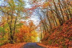 Jour ensoleillé en automne Image libre de droits