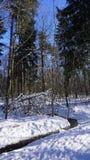 Jour ensoleillé en hiver Photo libre de droits