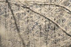 Jour ensoleillé givré d'arbuste Photo libre de droits