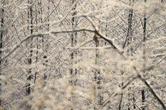 Jour ensoleillé givré d'arbuste dans la forêt Photos libres de droits