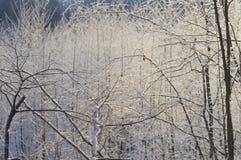 Jour ensoleillé givré de jeune forêt dans la forêt Photos libres de droits