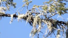 Jour ensoleillé lumineux avec une branche d'arbre banque de vidéos