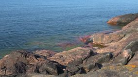 Jour ensoleillé sur le rivage du golfe de Finlande Péninsule de Hanko, Finlande banque de vidéos