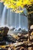 Jour ensoleillé au paysage tropical de forêt tropicale avec le wa bleu débordant Photo libre de droits
