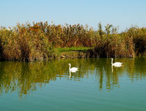 Jour ensoleillé d'automne sur le lac Photos libres de droits
