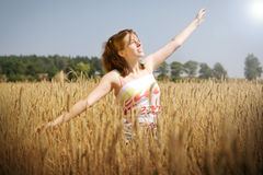 Jour ensoleillé sur la zone de blé Photographie stock libre de droits