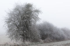 Jour froid sur la campagne, le brouillard et le gel français Photos libres de droits