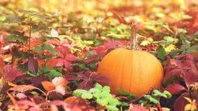 Jour heureux d'action de grâces Vacances d'automne Autumn Leaves Background Potiron Beau jour ensoleillé d'automne Temps d'automn photo libre de droits