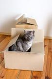 Jour mobile - boîtes en chat et en carton photos stock