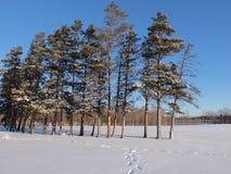 jour neigeux Photos libres de droits