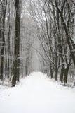 jour neigeux Images libres de droits