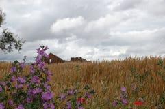 Jour nuageux de fleur pourpre Photos stock