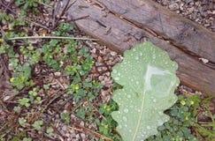 Jour pluvieux au parc Photo libre de droits