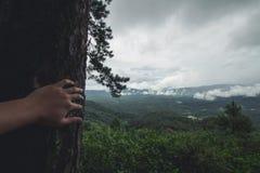 Jour pluvieux de forêt de tourisme de nature Photos stock