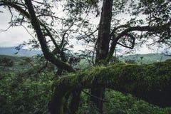 Jour pluvieux de forêt de tourisme de nature Images libres de droits