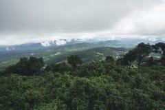 Jour pluvieux de forêt de tourisme de nature Image stock