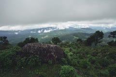 Jour pluvieux de forêt de tourisme de nature Photographie stock